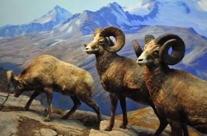 museo-di-storia-naturale_5824581